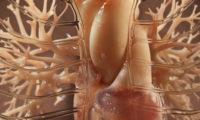 三维器官模型易胜博|客户端细胞微生物